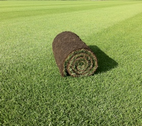 Lawn turf suppliers Yateley